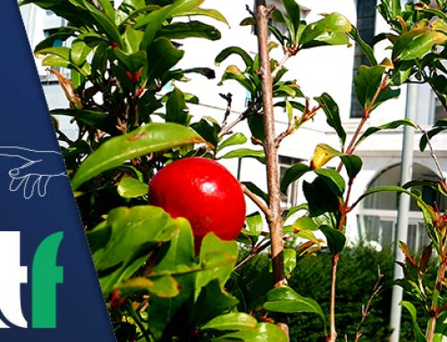 Global Climate Strike con il primo frutto autunnale dell'Albero del donatore.